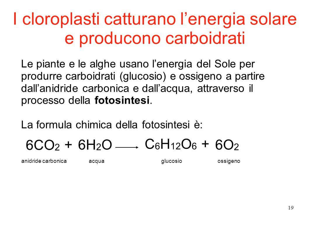 19 Le piante e le alghe usano l'energia del Sole per produrre carboidrati (glucosio) e ossigeno a partire dall'anidride carbonica e dall'acqua, attrav