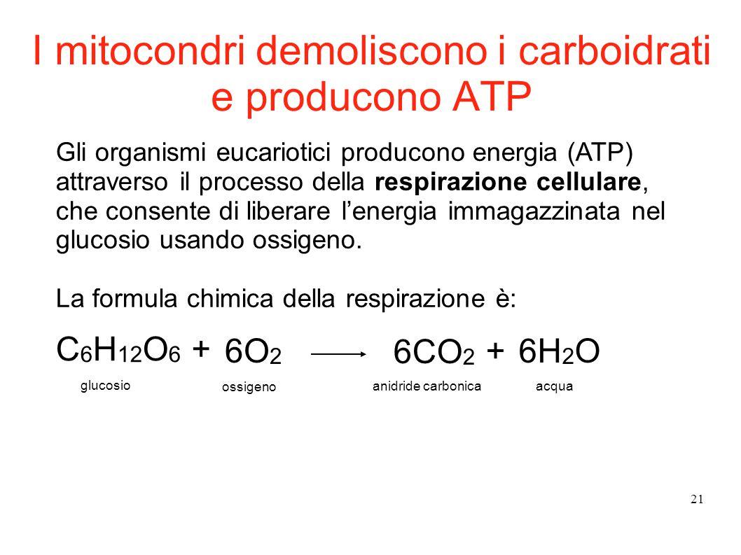 21 I mitocondri demoliscono i carboidrati e producono ATP Gli organismi eucariotici producono energia (ATP) attraverso il processo della respirazione