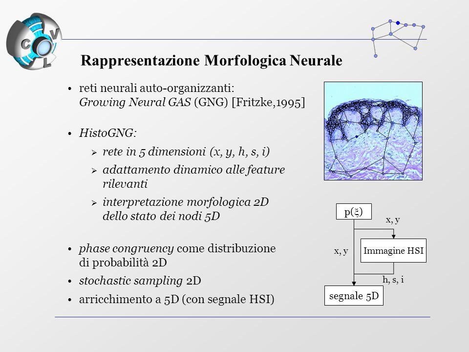 reti neurali auto-organizzanti: Growing Neural GAS (GNG) [Fritzke,1995] HistoGNG:  rete in 5 dimensioni (x, y, h, s, i)  adattamento dinamico alle feature rilevanti  interpretazione morfologica 2D dello stato dei nodi 5D phase congruency come distribuzione di probabilità 2D stochastic sampling 2D arricchimento a 5D (con segnale HSI) p(  ) Immagine HSI segnale 5D x, y h, s, i Rappresentazione Morfologica Neurale