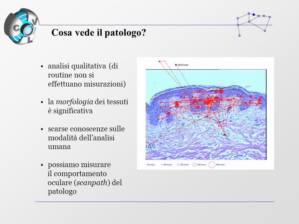 analisi qualitativa (di routine non si effettuano misurazioni) la morfologia dei tessuti è significativa scarse conoscenze sulle modalità dell'analisi umana possiamo misurare il comportamento oculare (scanpath) del patologo Cosa vede il patologo