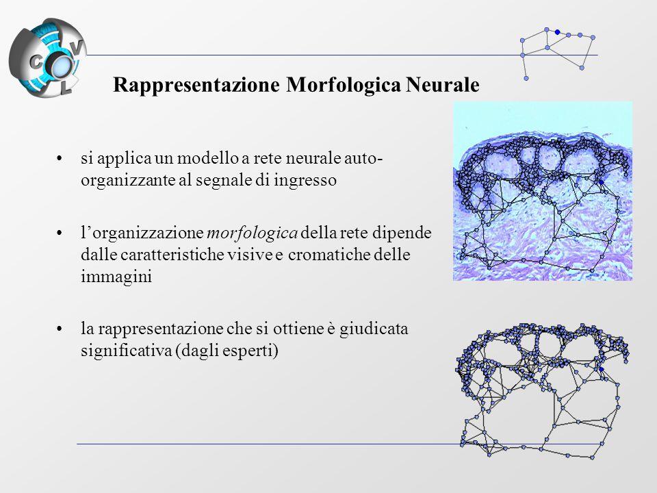 Rappresentazione Morfologica Neurale si applica un modello a rete neurale auto- organizzante al segnale di ingresso l'organizzazione morfologica della rete dipende dalle caratteristiche visive e cromatiche delle immagini la rappresentazione che si ottiene è giudicata significativa (dagli esperti)