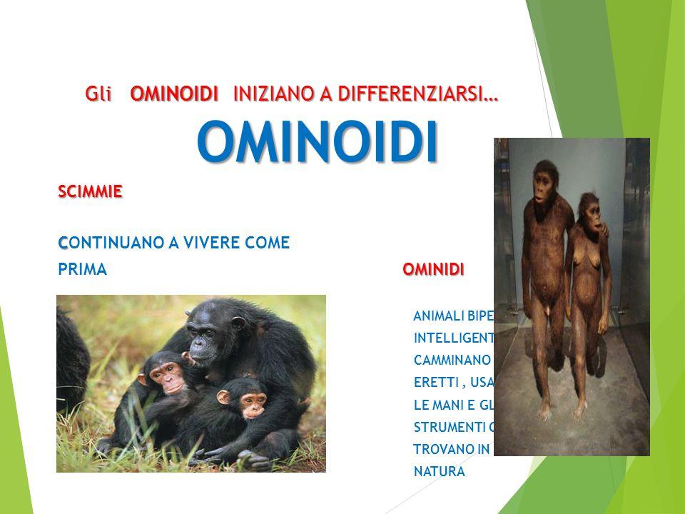 Gli OMINOIDI INIZIANO A DIFFERENZIARSI… OMINOIDI OMINOIDISCIMMIE C CONTINUANO A VIVERE COME OMINIDI PRIMA OMINIDI ANIMALI BIPEDI, INTELLIGENTI CAMMINA