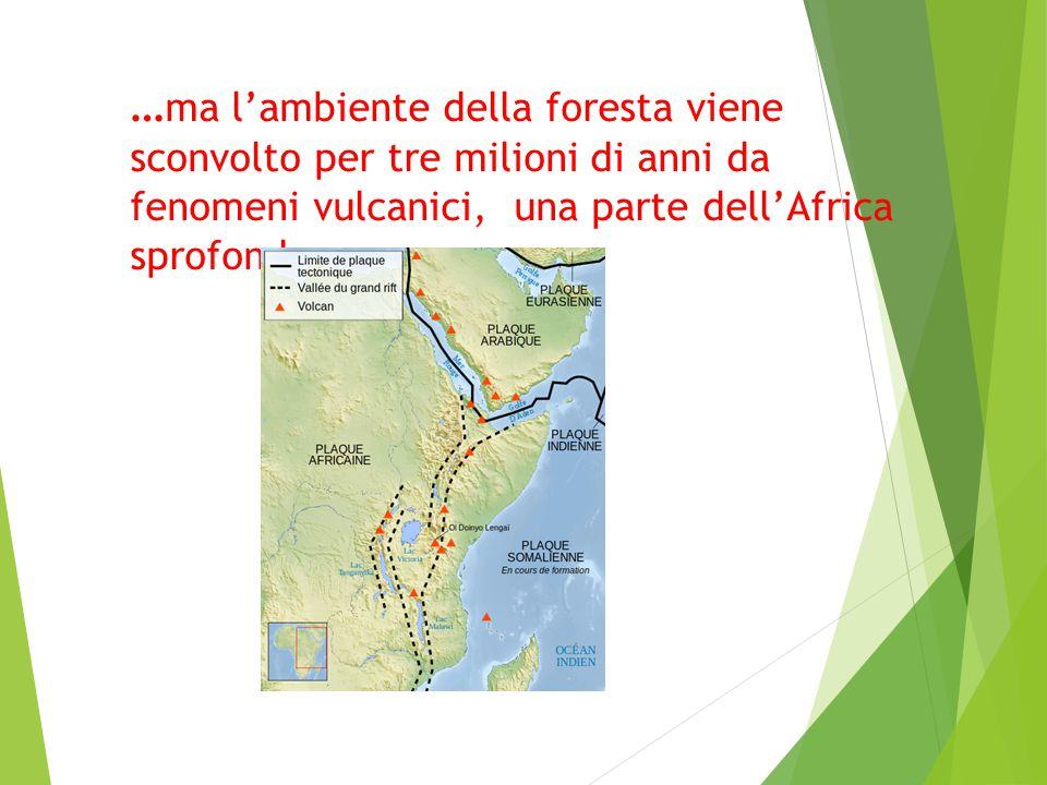… ma l'ambiente della foresta viene sconvolto per tre milioni di anni da fenomeni vulcanici, una parte dell'Africa sprofonda…
