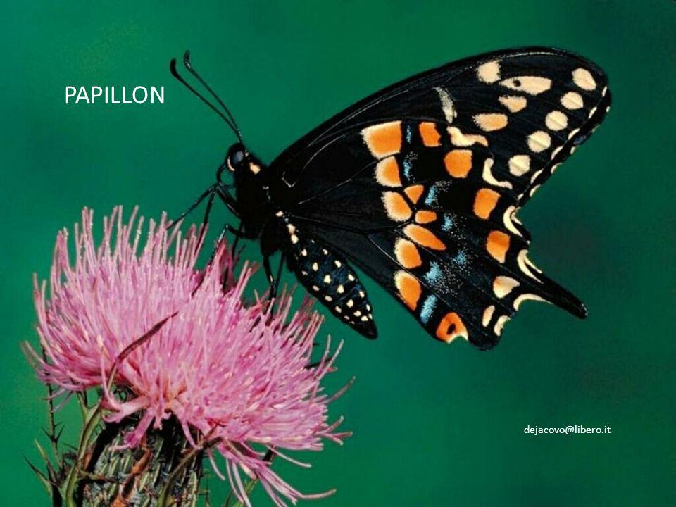 20 Progettazione e testo: F. De Jacovo Immagini: Online Musica: Papillon