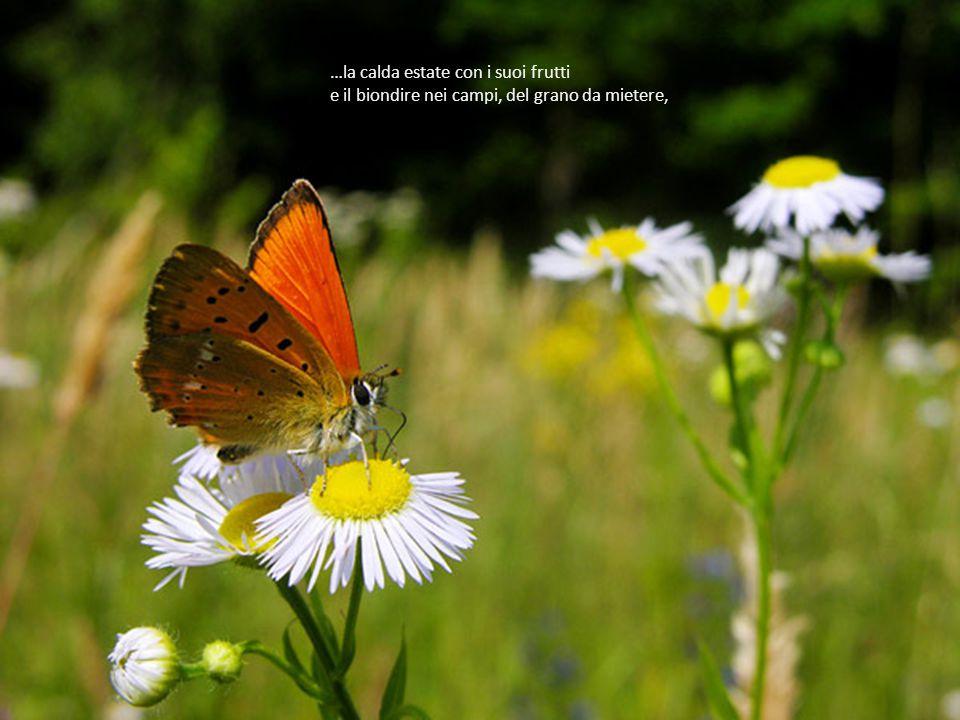 10 …la dolce primavera con tutti i suoi prati e alberi in fiore,