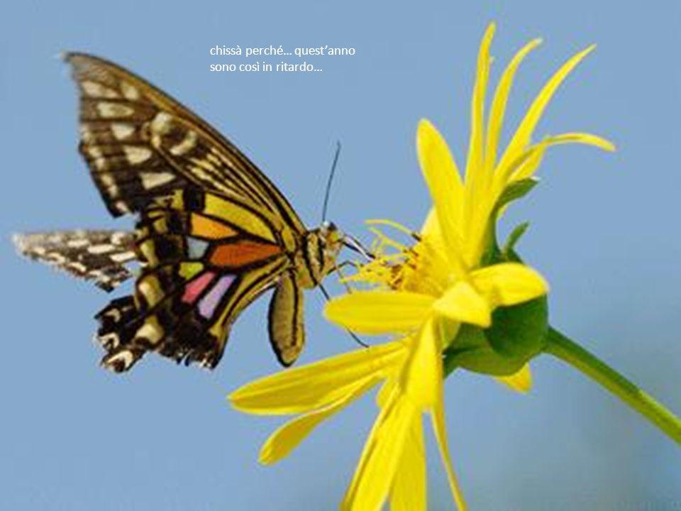 manca il colore e il profumo dei fiori il garrire di rondini in volo,