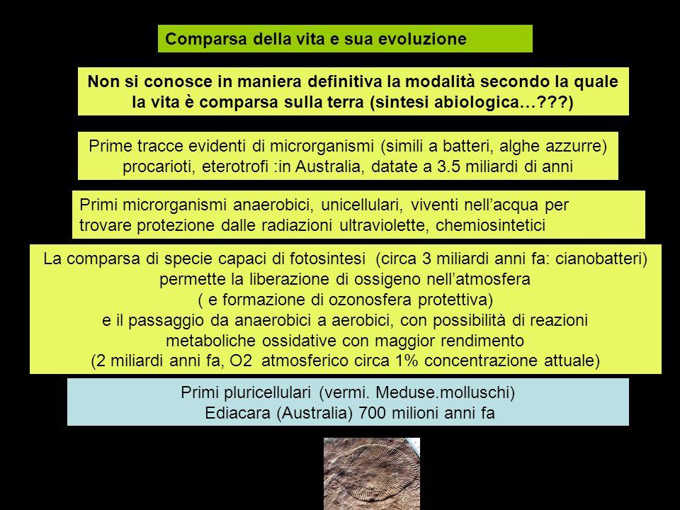 Comparsa della vita e sua evoluzione Non si conosce in maniera definitiva la modalità secondo la quale la vita è comparsa sulla terra (sintesi abiolog