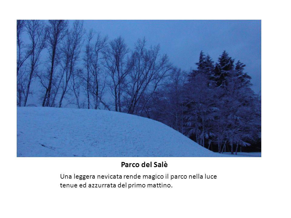 Parco del Salè Una leggera nevicata rende magico il parco nella luce tenue ed azzurrata del primo mattino.