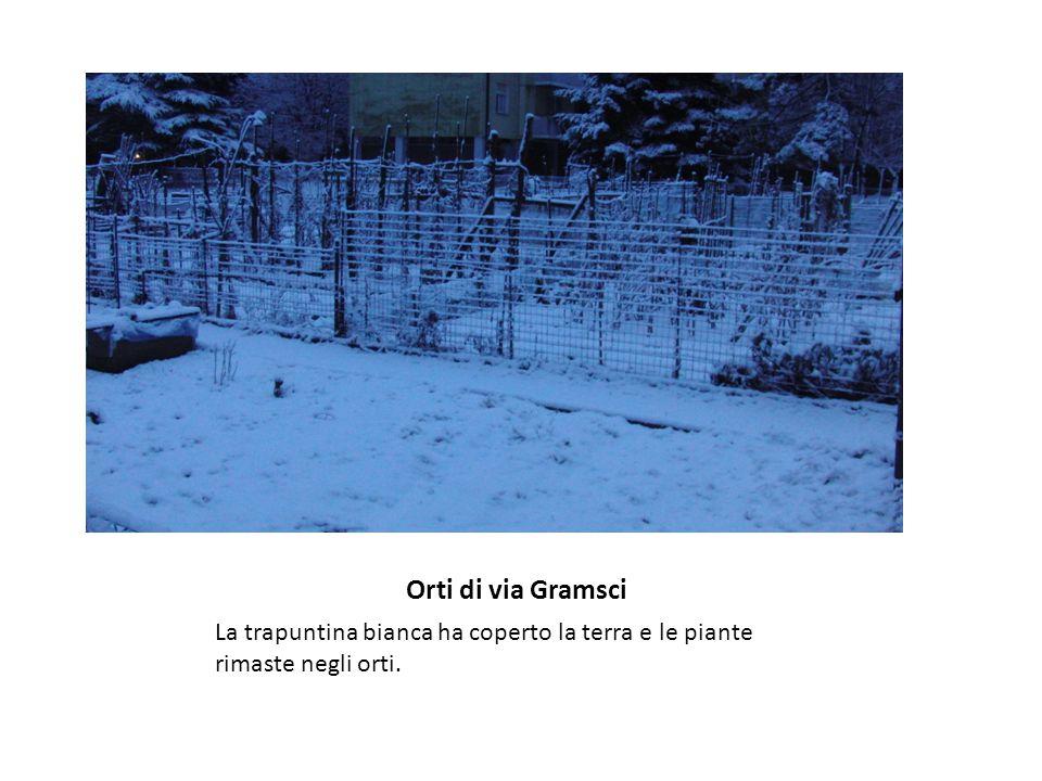 Orti di via Gramsci La trapuntina bianca ha coperto la terra e le piante rimaste negli orti.