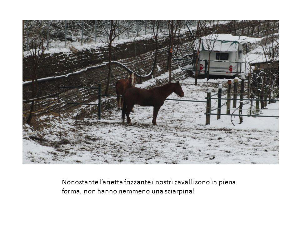 Nonostante l'arietta frizzante i nostri cavalli sono in piena forma, non hanno nemmeno una sciarpina!