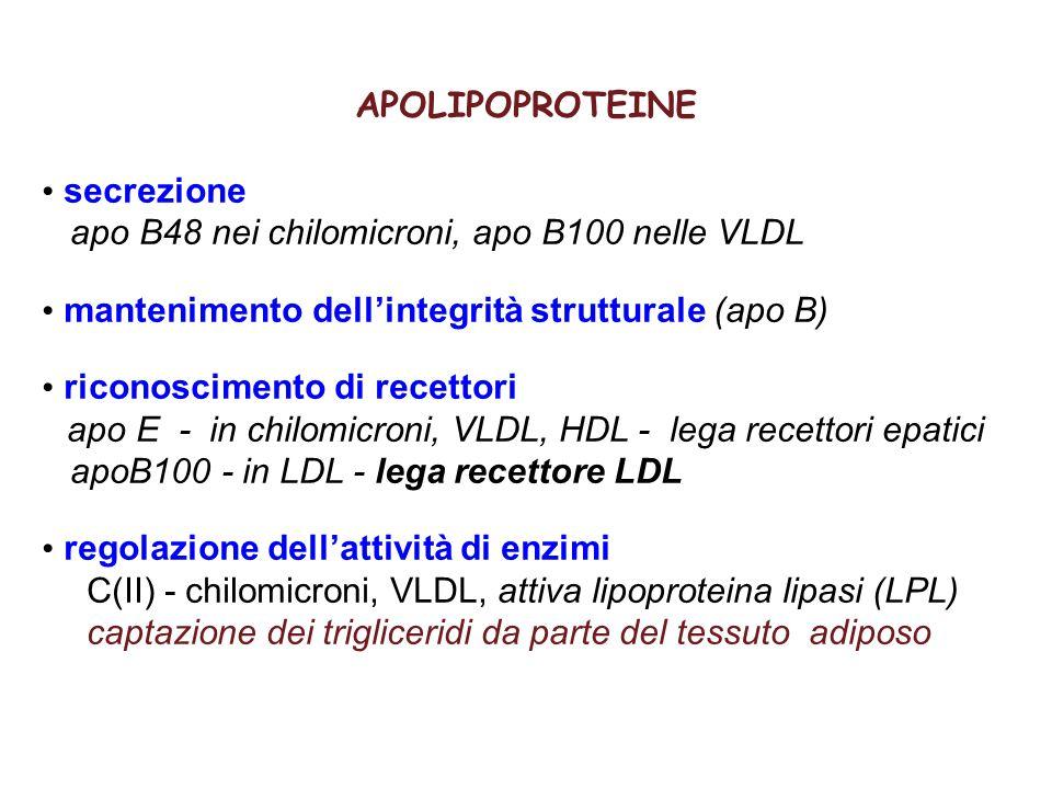 APOLIPOPROTEINE secrezione apo B48 nei chilomicroni, apo B100 nelle VLDL mantenimento dell'integrità strutturale (apo B) riconoscimento di recettori a