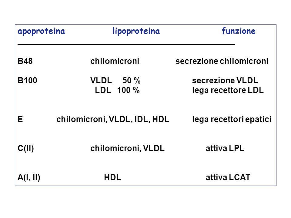 apoproteina lipoproteina funzione ___________________________________________________ B48chilomicronisecrezione chilomicroni B100 VLDL 50 %secrezione