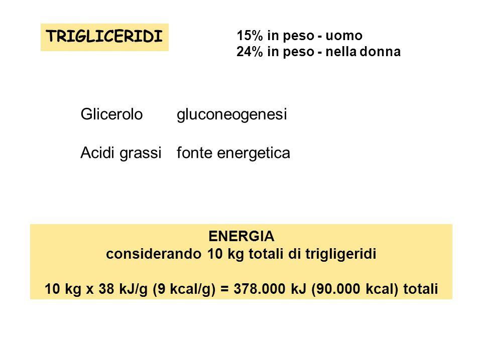 TRIGLICERIDI 15% in peso - uomo 24% in peso - nella donna ENERGIA considerando 10 kg totali di trigligeridi 10 kg x 38 kJ/g (9 kcal/g) = 378.000 kJ (9