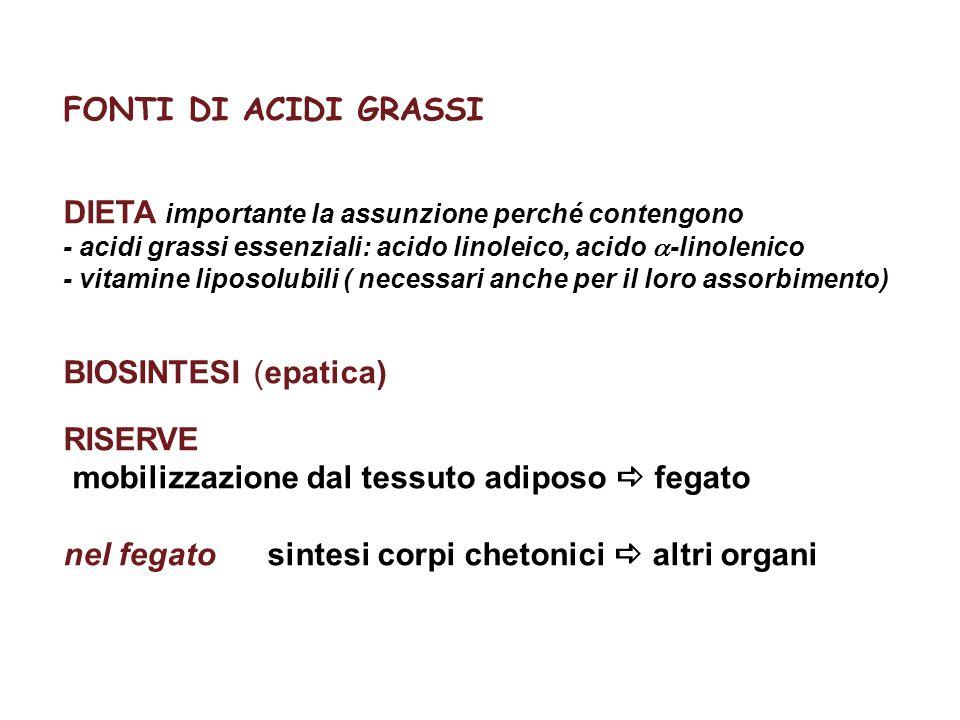 FONTI DI ACIDI GRASSI DIETA importante la assunzione perché contengono - acidi grassi essenziali: acido linoleico, acido  -linolenico - vitamine lipo