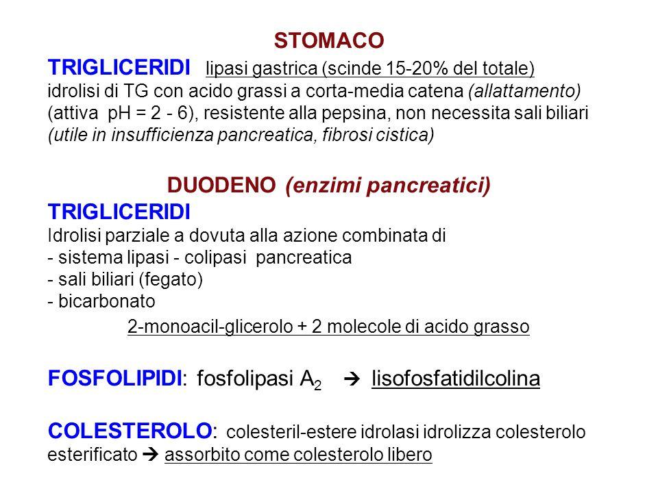 STOMACO TRIGLICERIDI lipasi gastrica (scinde 15-20% del totale) idrolisi di TG con acido grassi a corta-media catena (allattamento) (attiva pH = 2 - 6