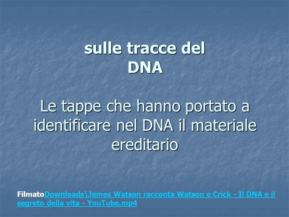 sulle tracce del DNA Le tappe che hanno portato a identificare nel DNA il materiale ereditario FilmatoDownloads\James Watson racconta Watson e Crick - Il DNA e il segreto della vita - YouTube.mp4Downloads\James Watson racconta Watson e Crick - Il DNA e il segreto della vita - YouTube.mp4