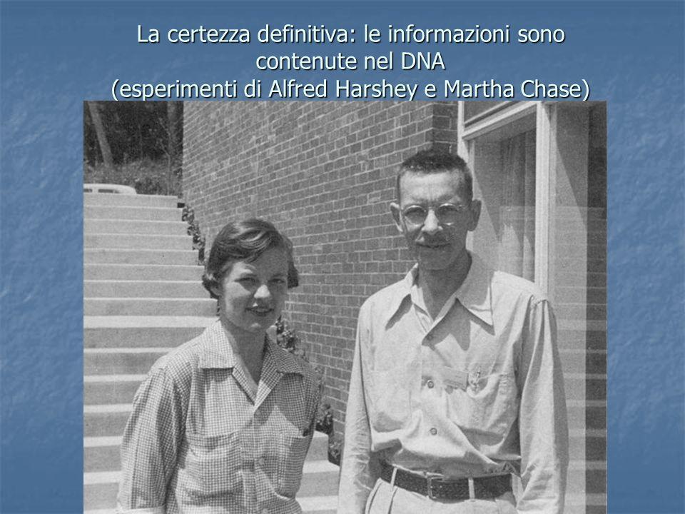 La certezza definitiva: le informazioni sono contenute nel DNA (esperimenti di Alfred Harshey e Martha Chase)