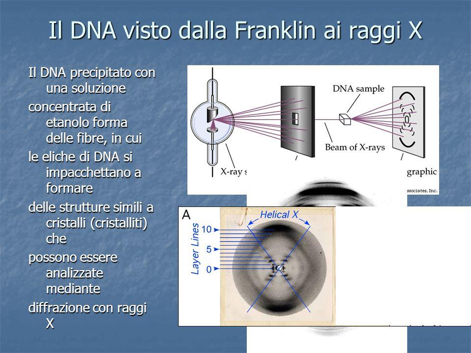 Il DNA visto dalla Franklin ai raggi X Il DNA precipitato con una soluzione concentrata di etanolo forma delle fibre, in cui le eliche di DNA si impacchettano a formare delle strutture simili a cristalli (cristalliti) che possono essere analizzate mediante diffrazione con raggi X Il D NA precipitato con un a soluzio ne con centrata di etanolo forma delle fibre, in cui le eliche di DN A si impacchettano a formare delle strutture simili a cristalli (cristalliti) che possono essere analizzate mediante d iffrazione con raggi X