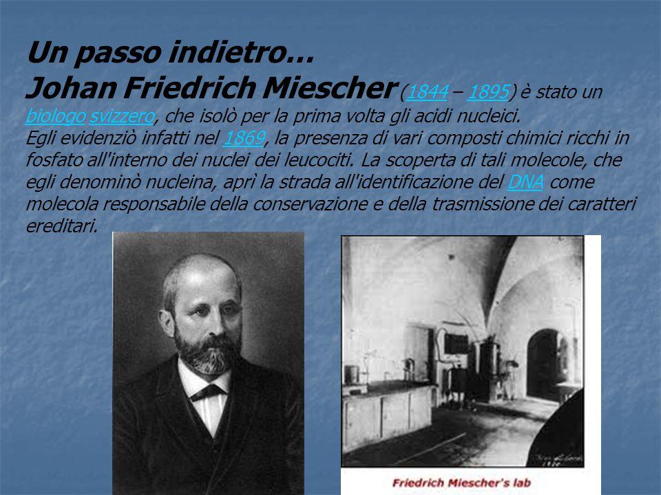 Un passo indietro… Johan Friedrich Miescher (1844 – 1895) è stato un biologo svizzero, che isolò per la prima volta gli acidi nucleici.18441895 biologosvizzero Egli evidenziò infatti nel 1869, la presenza di vari composti chimici ricchi in fosfato all interno dei nuclei dei leucociti.