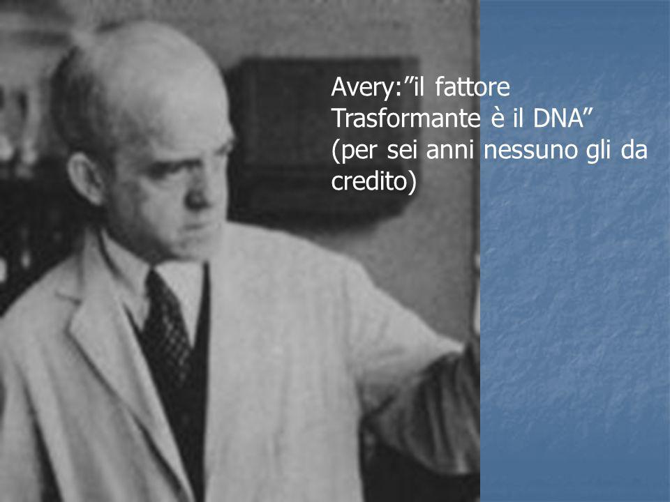 Modello reale del DNA in visione assiale