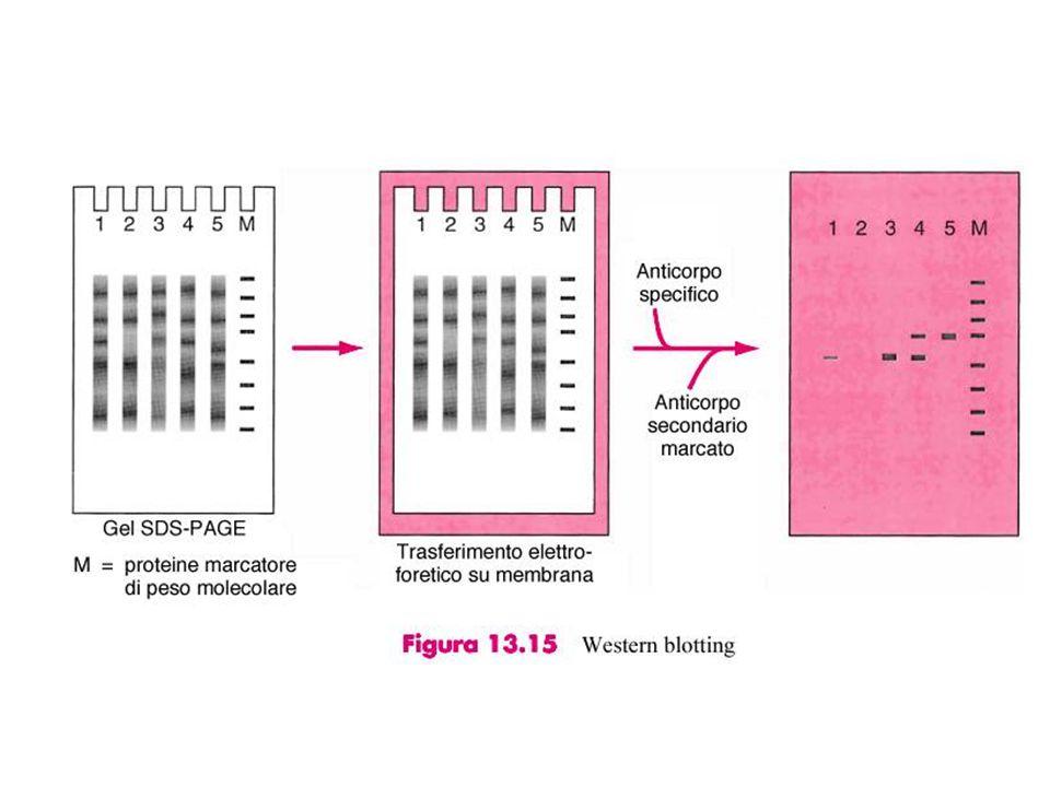 Profilo differenziale mediante microarray