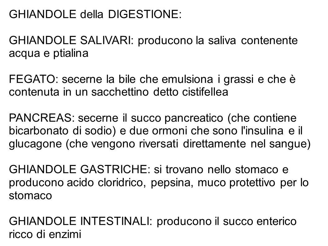 GHIANDOLE della DIGESTIONE: GHIANDOLE SALIVARI: producono la saliva contenente acqua e ptialina FEGATO: secerne la bile che emulsiona i grassi e che è