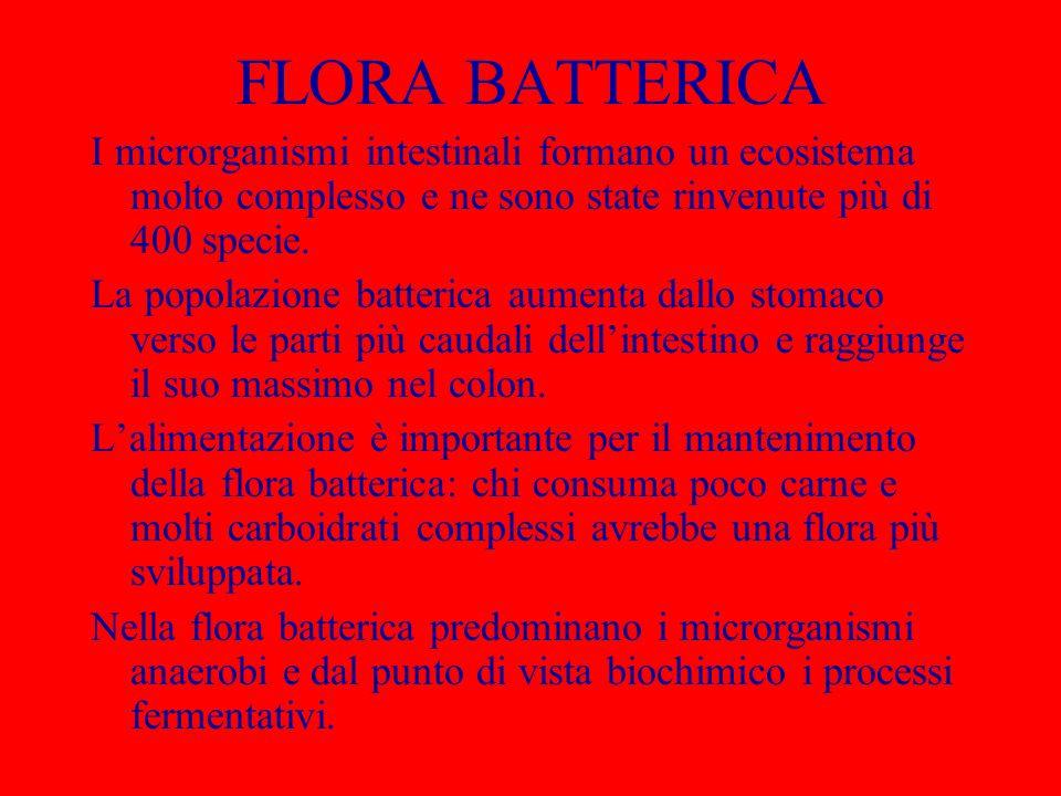 FLORA BATTERICA I microrganismi intestinali formano un ecosistema molto complesso e ne sono state rinvenute più di 400 specie. La popolazione batteric