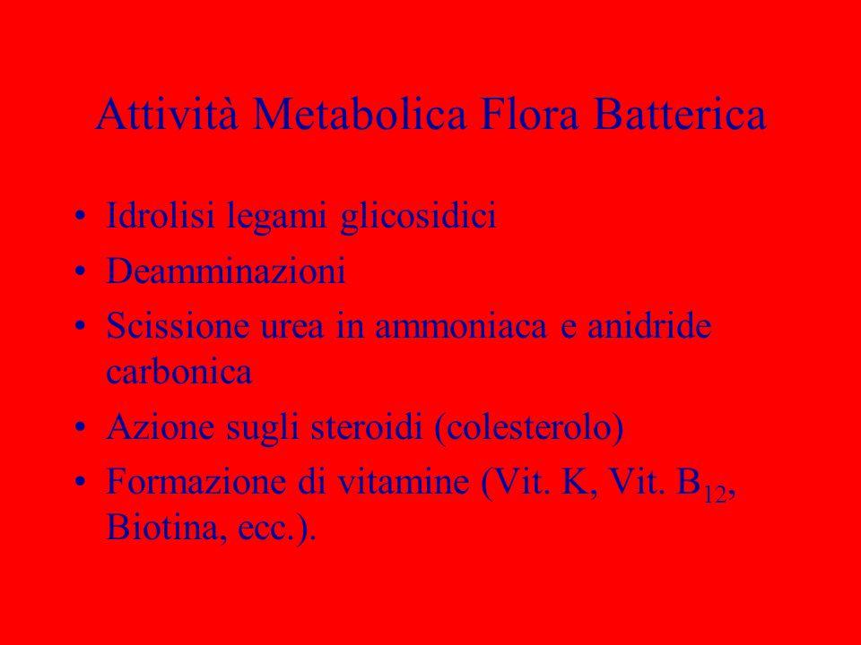 Attività Metabolica Flora Batterica Idrolisi legami glicosidici Deamminazioni Scissione urea in ammoniaca e anidride carbonica Azione sugli steroidi (