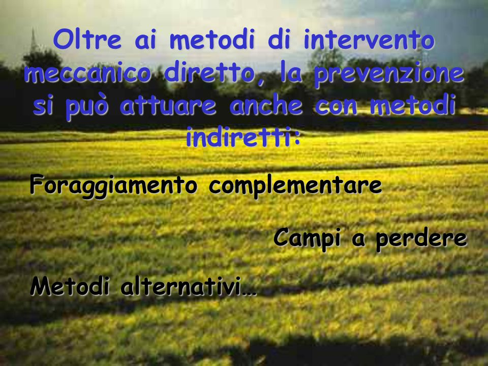 Oltre ai metodi di intervento meccanico diretto, la prevenzione si può attuare anche con metodi indiretti: Foraggiamento complementare Campi a perdere Metodi alternativi…