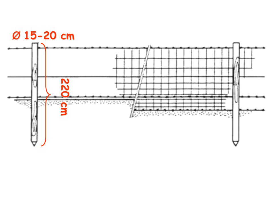220 cm Ø 15-20 cm