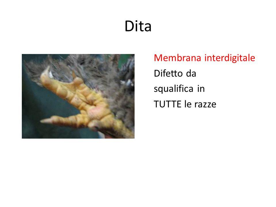 Dita Membrana interdigitale Difetto da squalifica in TUTTE le razze