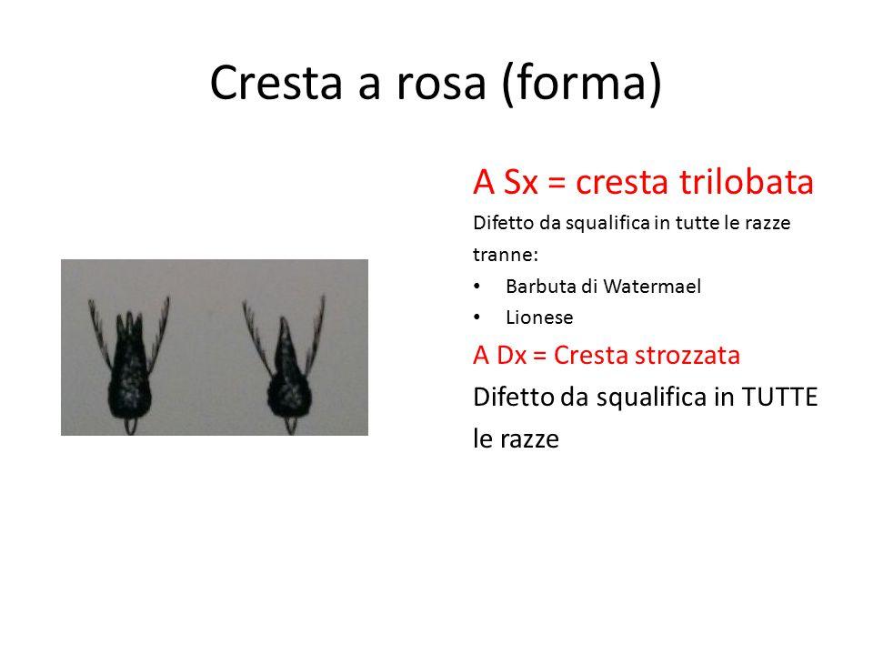 Cresta a rosa (forma) A Sx = cresta trilobata Difetto da squalifica in tutte le razze tranne: Barbuta di Watermael Lionese A Dx = Cresta strozzata Dif