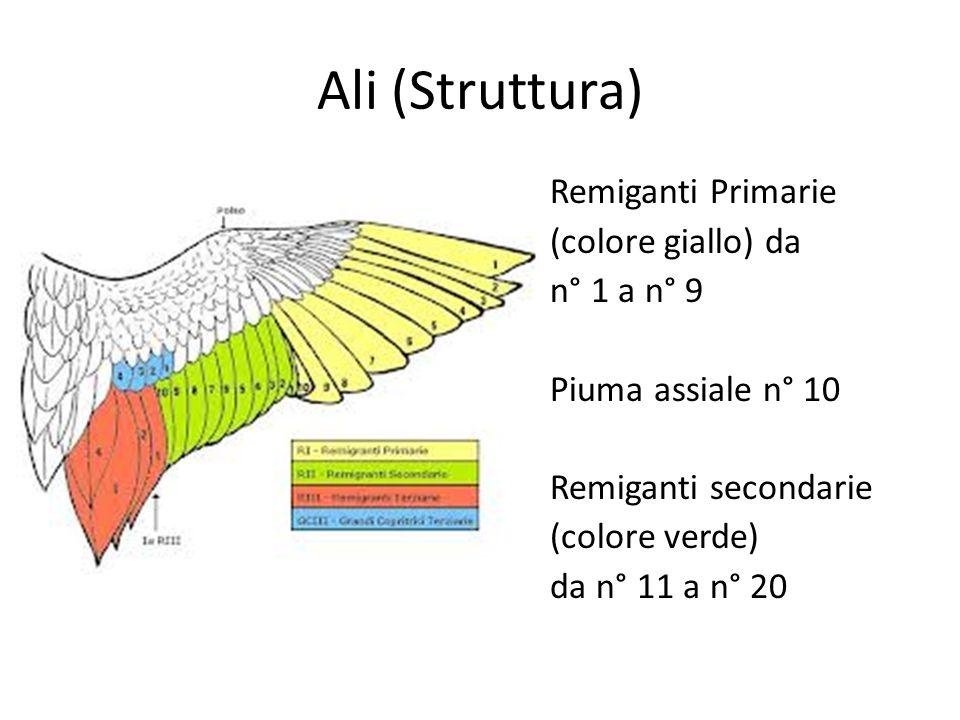 Sperone Sperone nella gallina Difetto grave in tutte le razze tranne: Sumatra Cubalaya Combattente di Liegi Comb.