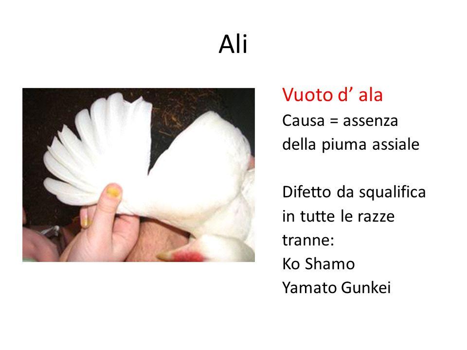 Ali Vuoto d' ala Causa = assenza della piuma assiale Difetto da squalifica in tutte le razze tranne: Ko Shamo Yamato Gunkei