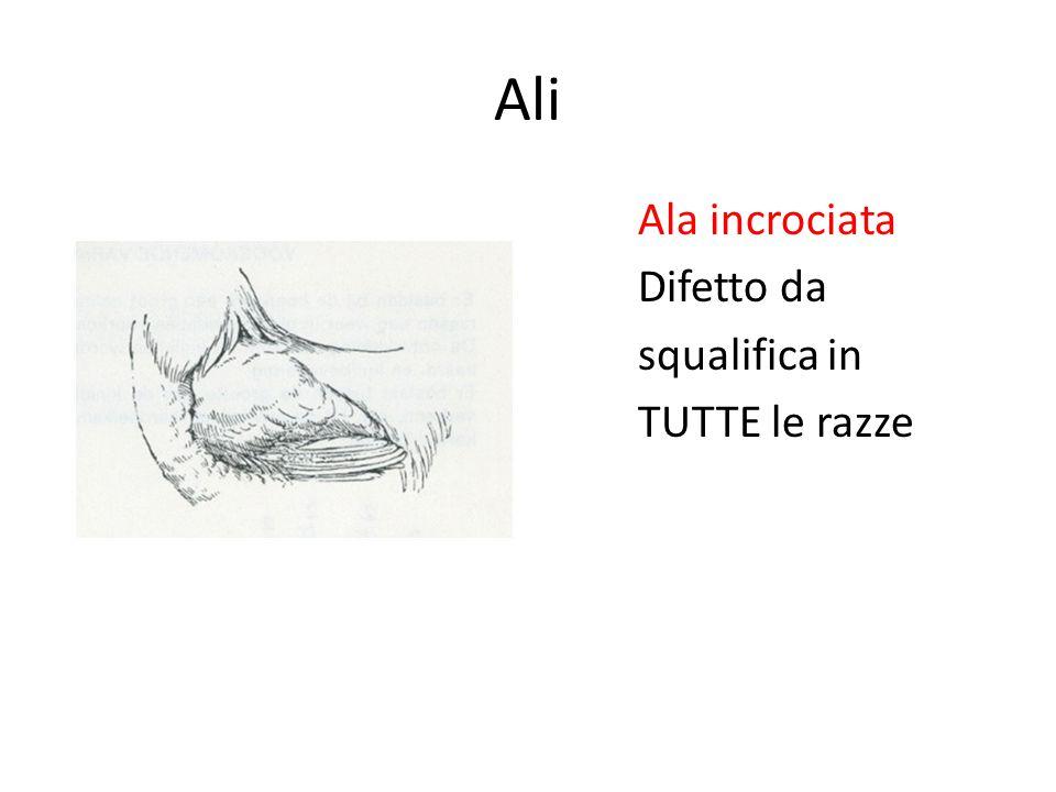 Ali Ala incrociata Difetto da squalifica in TUTTE le razze
