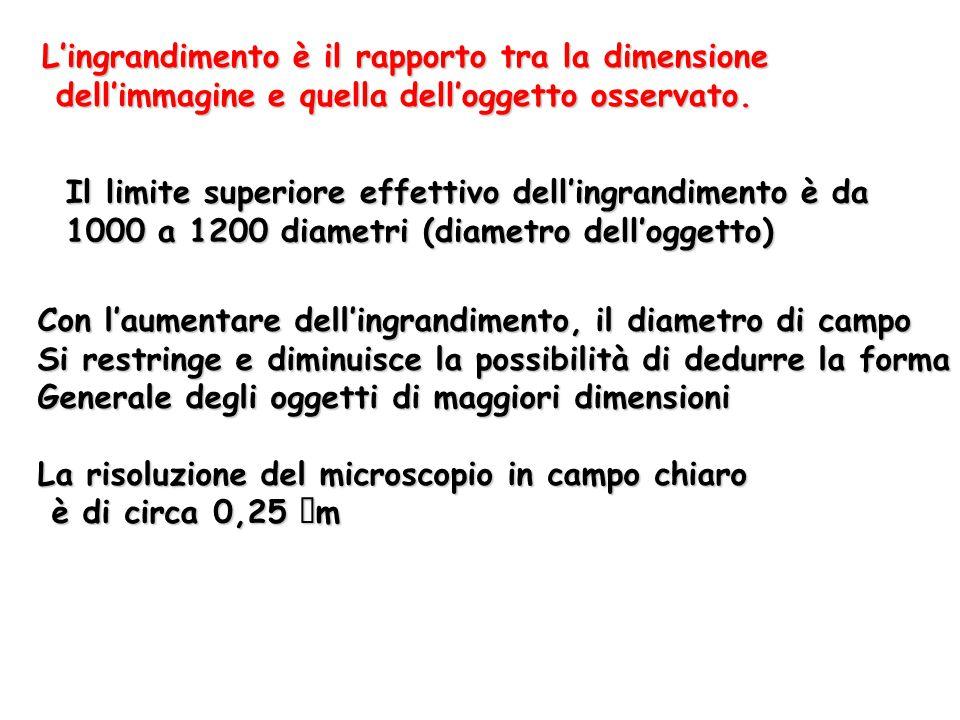 L'ingrandimento è il rapporto tra la dimensione dell'immagine e quella dell'oggetto osservato. dell'immagine e quella dell'oggetto osservato. Il limit