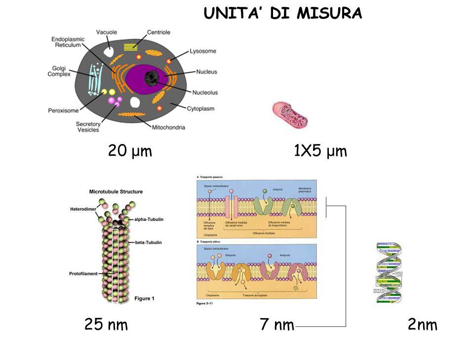 20 μ m 1X5 μ m μmμm 25 nm 7 nm 2nm UNITA' DI MISURA