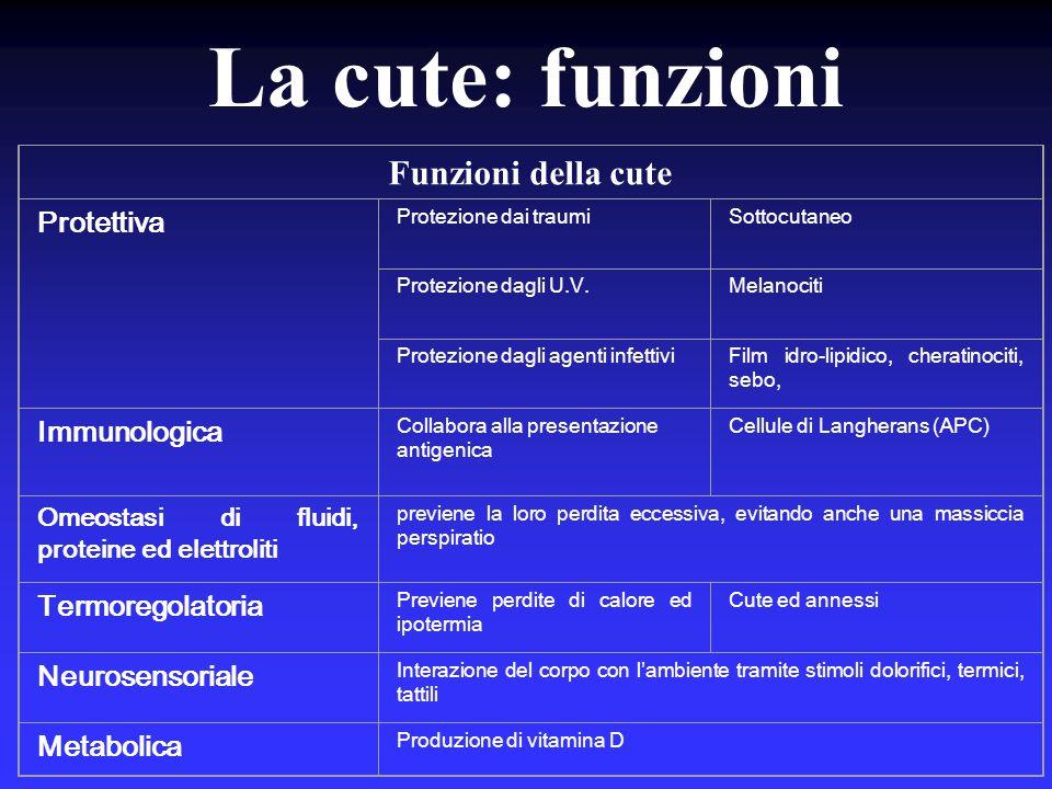La cute – Colore Melanina  Bruno Ossiemoglobina  Rosso Carbossiemoglobina  Blu Carotene/Pro Vit.