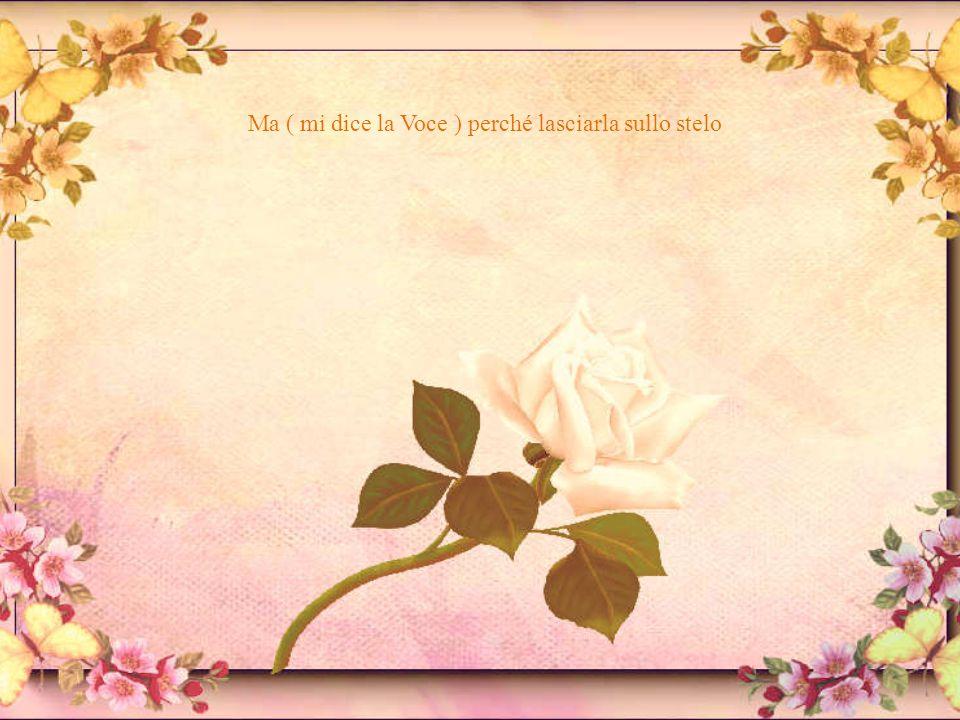 che completa la rosa….