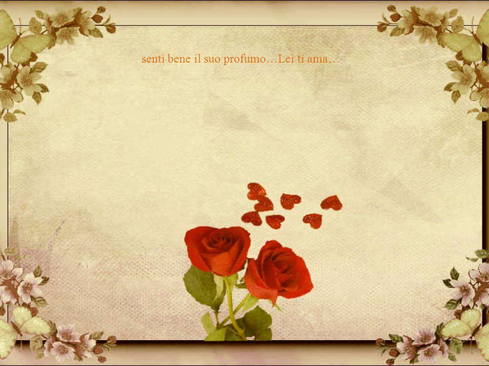 Lei è rosa, poeta….così si chiama…