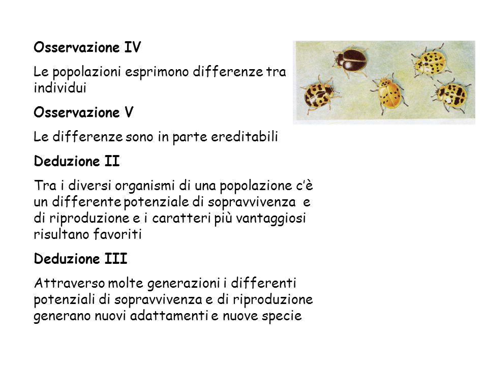 Osservazione IV Le popolazioni esprimono differenze tra individui Osservazione V Le differenze sono in parte ereditabili Deduzione II Tra i diversi or