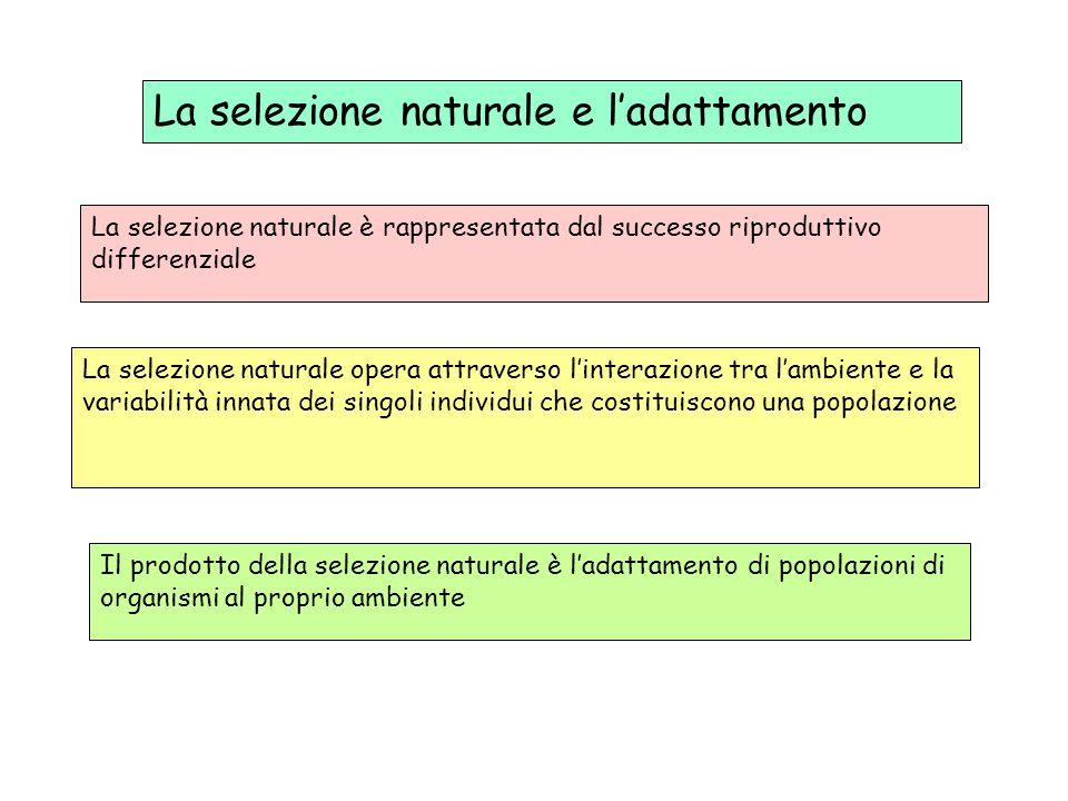 La selezione naturale e l'adattamento La selezione naturale è rappresentata dal successo riproduttivo differenziale La selezione naturale opera attrav