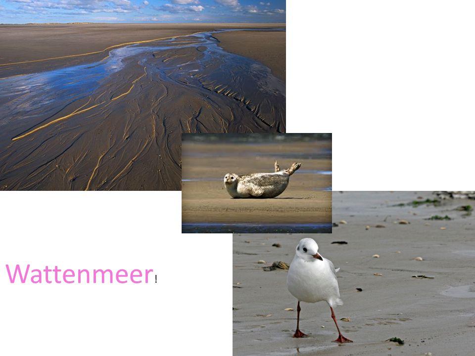 Wattenmeer !