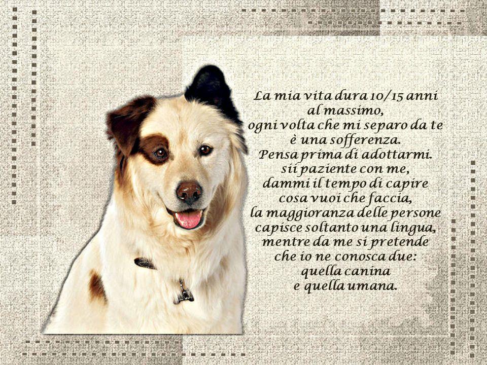 La preghiera di un cane