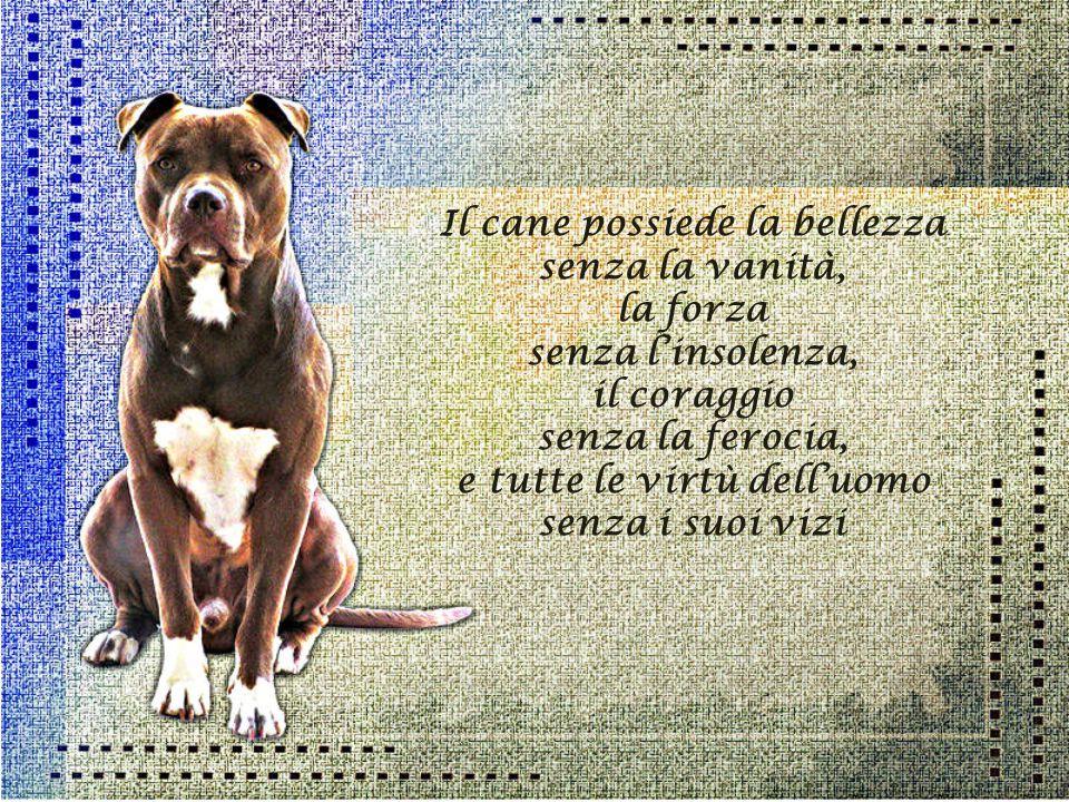 Chi non ha mai posseduto un cane non può sapere cosa significhi essere amati.