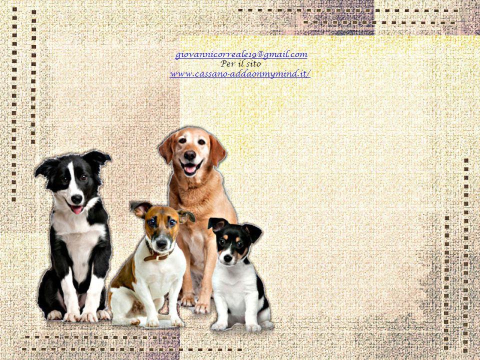 Il cane possiede la bellezza senza la vanità, la forza senza l'insolenza, il coraggio senza la ferocia, e tutte le virtù dell'uomo senza i suoi vizi
