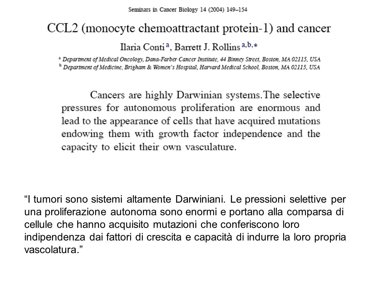 cDNA del TF vettore