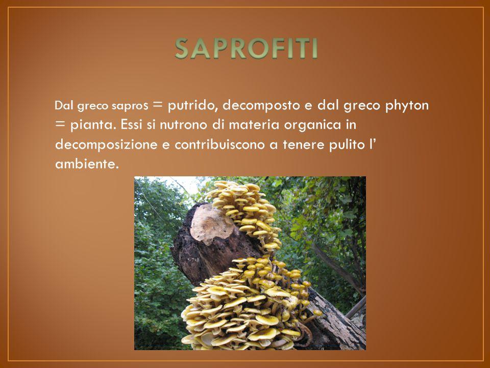 Dal greco sapro s = putrido, decomposto e dal greco phyton = pianta.