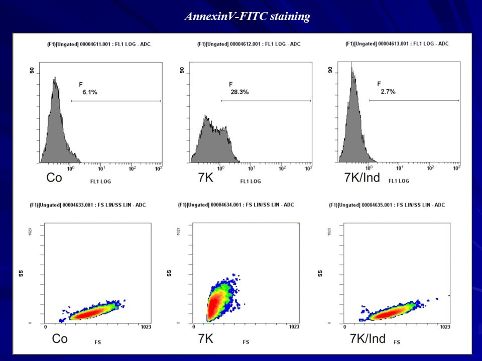 AnnexinV-FITC staining