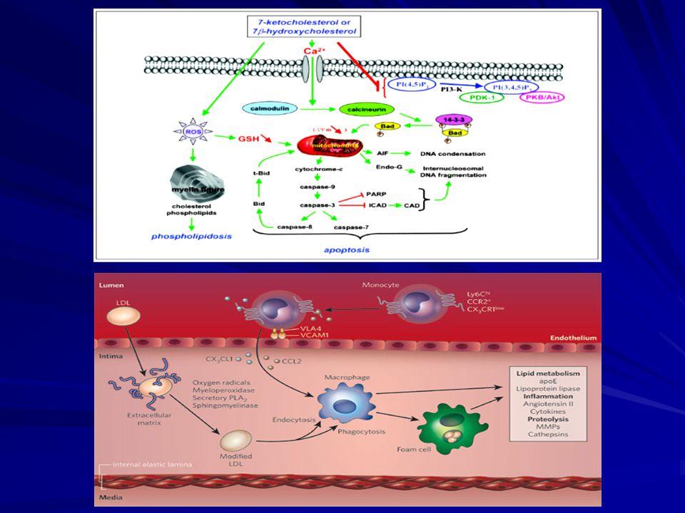DiOC6 staining: valutazione del  m mitocondriale